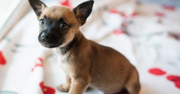 Pin By Ava Adair On Dogs Kitten Adoption Adoption Pets