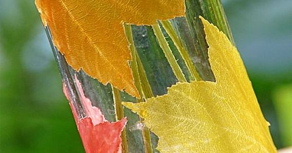 DIY Transparent Fall Leaves [Fall Crafts]