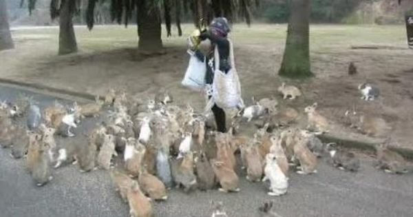 Ōkunoshima Island. Everyone loves rabbits! With their long ears, adorable noses, cute