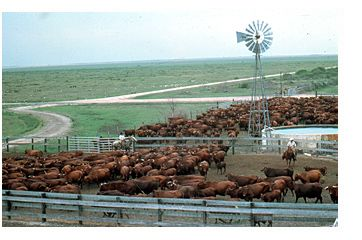 The King Ranch Houses With History King Ranch Cattle Ranch Life