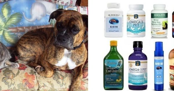 How To Choose A Good Omega 3 Fish Oil For Your Dog Cat Ottawa