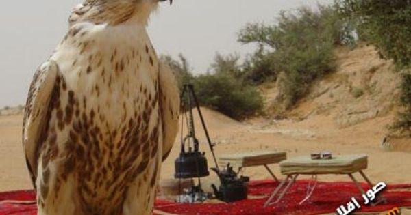 Pin By صقر الصحراء Falcon Desert On صور للصقور المميزة Animals Bird Owl