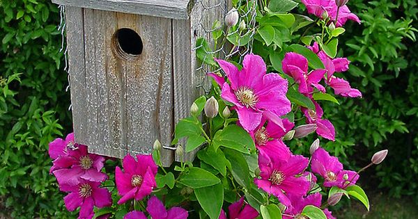 wild bird house, pretty pink flowers!