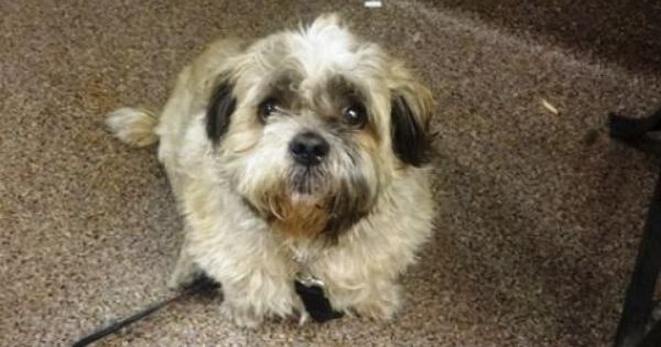 How do you find SPCA dogs for adoption in Edmonton?