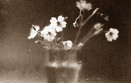 sims speculum image 7F6YpK