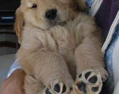 Golden puppies are more fun than babies. I've had both!