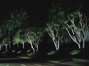 Attract Attention To Your Trees By Illuminating From The Ground Up Landscape Lighting Outdoor Lighting Landscape Lighting Kits