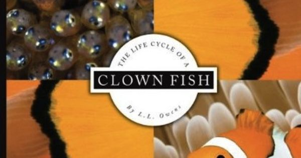 The life cycle of a clown fish books by l l owens for Clown fish life cycle