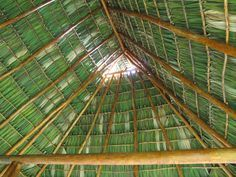 How To Tie On A Palm Frond Roof Palm Fronds Thatched Roof Palm Leaves