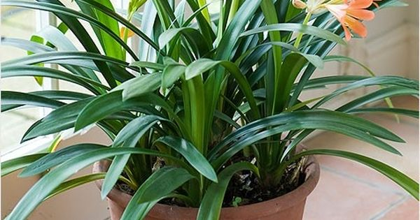 Indoor house plant with purple flowers besides add color to your home