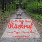 Das Verflixte Thema Ruckruf Unsere Tipps Wie Euer Hund Zuverlassig Kommt Hunde Hunde Erziehen Hundchen Training