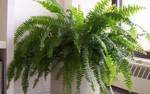 5 plants that will absorb excess humidity in your house plants house and gardens - Five indoor plants that absorb humidity ...