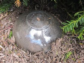 How To Get Rid Of Wasp Nest In Soil