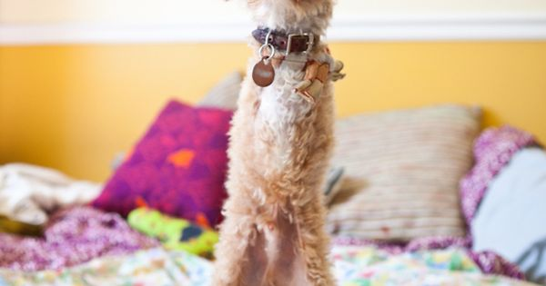 Meet Ramen Noodle, The Adorable Dog With No Arms - BuzzFeed Mobile