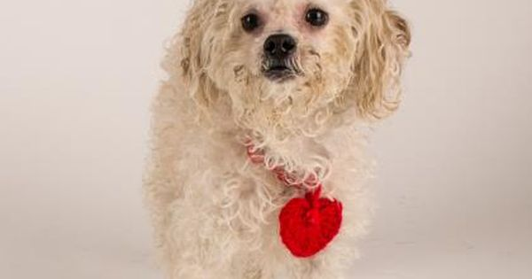 Doogie Is Available For Adoption At Our Mission Campus Adoption Dog Adoption Save A Dog