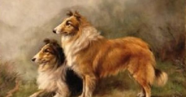 Pin By Terry Wideman On Shelties Dog Paintings Dog Art Collie Dog