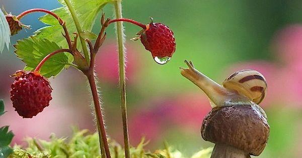 Faszinierender Einblick in die Welt der Schnecken: Fotos ...
