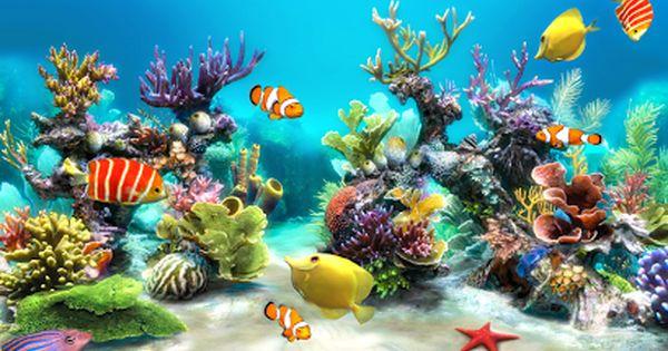 Fond D écran Aquarium Animé Gratuit Windows 10