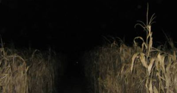 Haunted Corn Maze Reminds Me Of Our Paintball Adventure In The