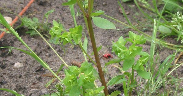 Liminer les herbes sauvages pour garder un jardin et des all es impeccables sans pour autant for Allee de jardin sans herbe