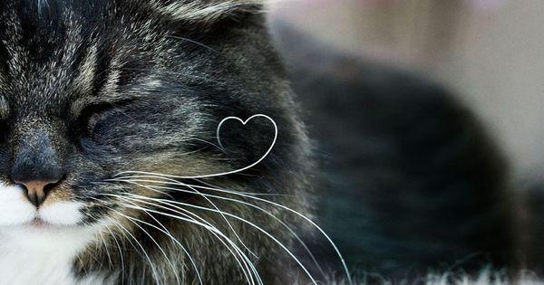 Kitty whisker heart