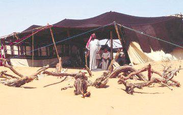 Bedouin Goat Hair Woven Tent Tent Tent Hire Arabian Tent