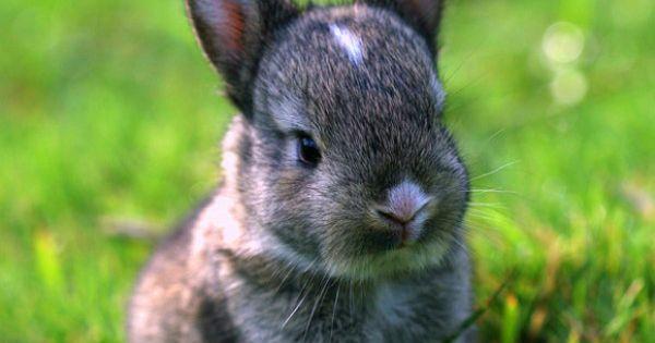 Cute Baby Dwarf Bunny