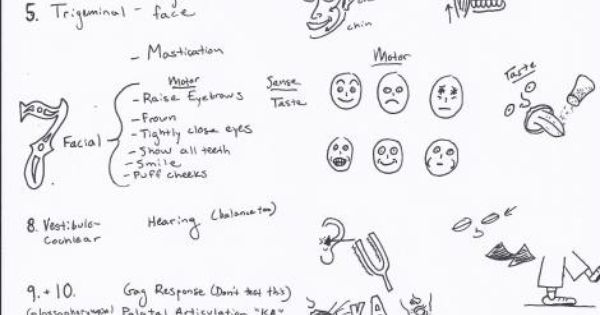 Cranial nerves cheat sheets and mike d antoni on pinterest