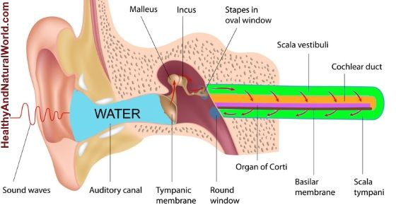 Easy And Natural Ways To Remove Water Out Of Your Ear Water In Ear Remedy Water In Ear Clogged Ears