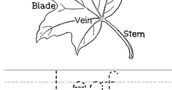 Leaf With Veins Worksheet From TwistyNoodle.com
