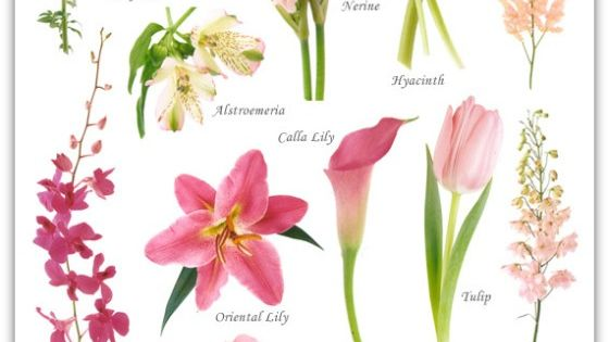 Flowers by Color, including pink, red, orange, peach, yellow, green, blue, violet and white flowers.