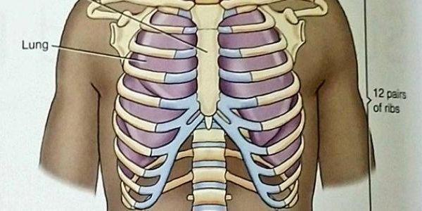 تم الإجابة عليه ما عدد العظام التي تشكل القفص الصدري Tattoos