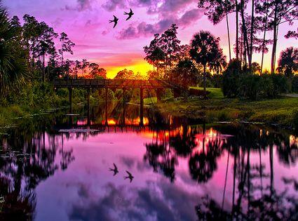 Purple Sunset on Riverbend Park - Jupiter, Florida