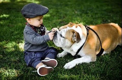 Funny English Bulldog And Baby Video Compilation Funny Dogs And