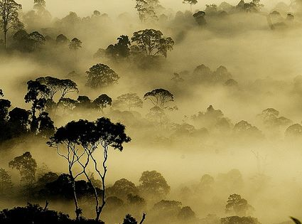 """Early morning view of rainforest in Borneo. Photo by cknara. dazehub"" -"