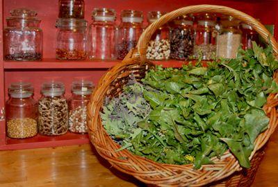 Liste de plantes sauvages cuisiner recettes herbes et - Cuisiner les herbes sauvages ...