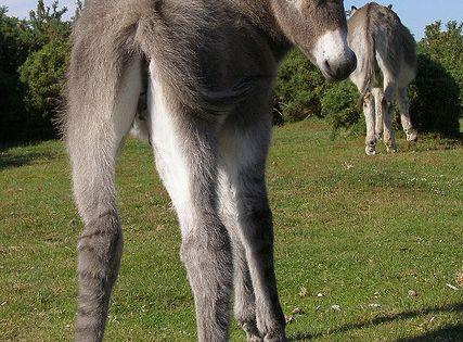 Fluffy Kawaii Baby Donkey Foal With Mama | Horses ...