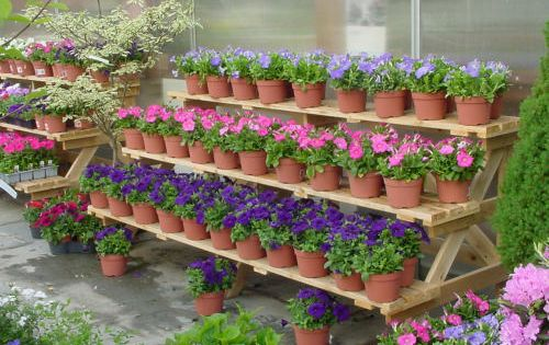 Garden Center Merchandising Display Ideas – Plant World Nursery and Garden Center