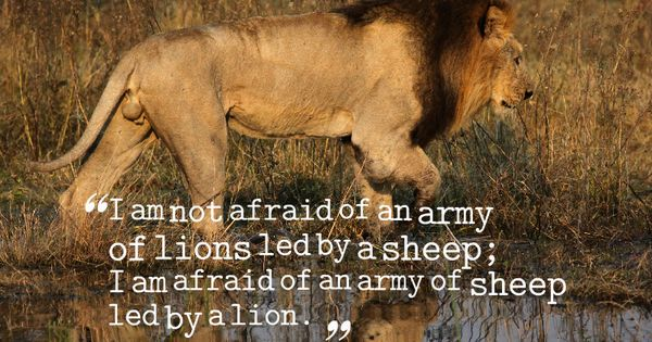 """""""I am not afraid of an army of lions led by a sheep; I am ..."""