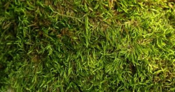 How To Grow Moss With Buttermilk Gardens Ground