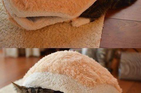 This fuzzy cat bun. | 23 Insanely Clever Products Every Cat Owner Will Want cat beds original plush cozy cute cookie