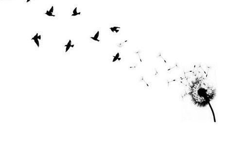 Dessin pissenlit qui s envole avec oiseaux femme a 500 375 tatouage pinterest - Tatouage oiseau qui s envole ...