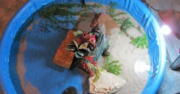Indoor Turtle Pool Setup Turtle Indoor And Animal