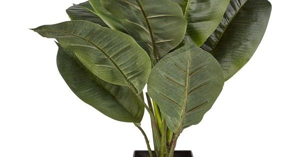 Artificial real touch rubber plant 29 liked on polyvore for Real plants for home decor