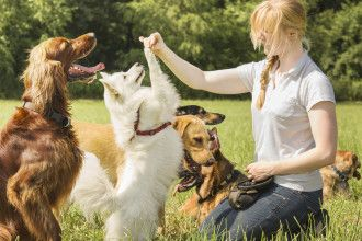 55 Creative Pet Sitting Business Names Biz Junky Online Dog