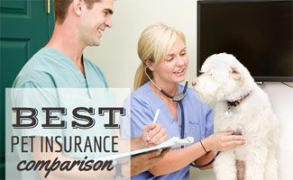 What S The Best Pet Insurance Company For 2020 Best Pet Insurance Pet Insurance Reviews Insurance Comparison