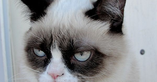 Grumpy cat meme: I can't wait for the holidays to be over