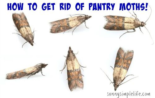 How To Get Rid Of Pantry Moths Sunnysimplelife Com The