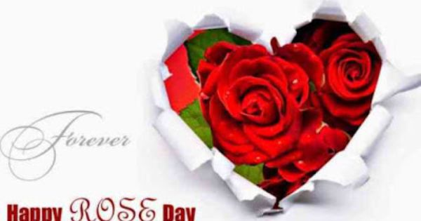 Best Rose Day Sms In English Rose Day Wallpaper Valentines Roses Rose