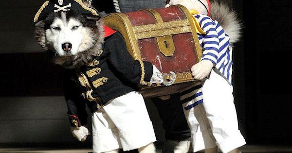 Photo humour insolite costume pirate tr sor chien for Deguisement trop drole